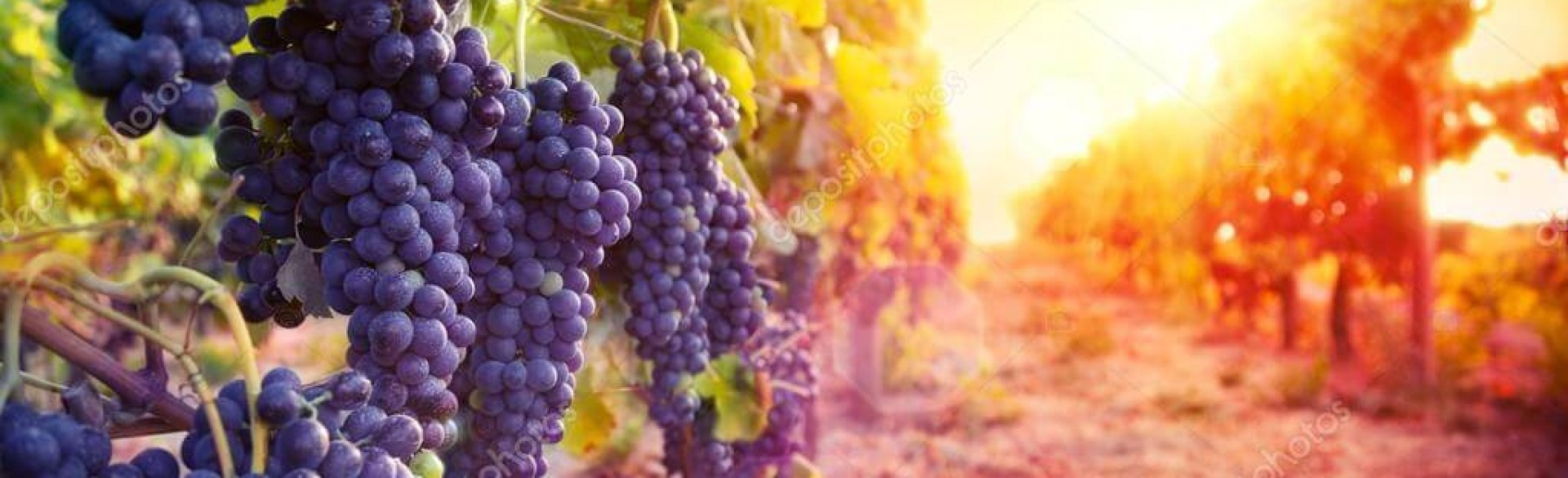 Грузинские вина BADAGONI